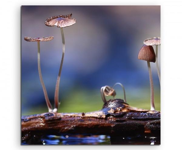 Naturfotografie – Kleine Pilze auf Holzstück auf Leinwand