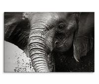 120x80cm Wandbild Namibia Nationalpark Elefant Wasser schwarz weiß