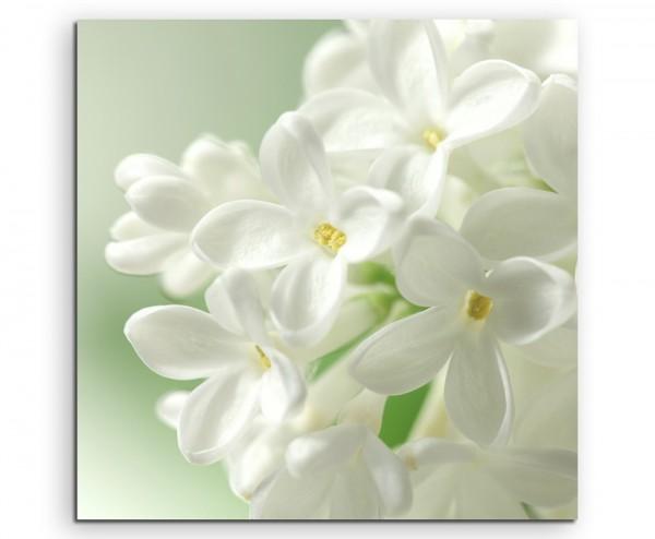 Naturfotografie – Weiße Blumen mit pastellgrünem Hintergrund auf Leinwand