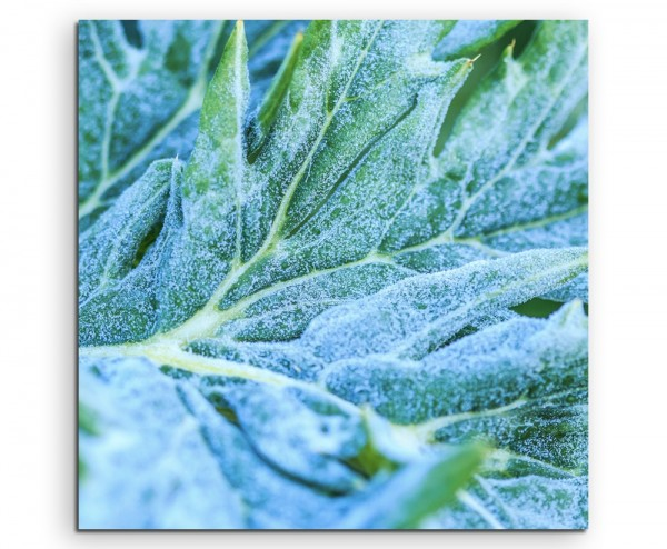 Naturfotografie – Gemüseblatt mit Frost auf Leinwand