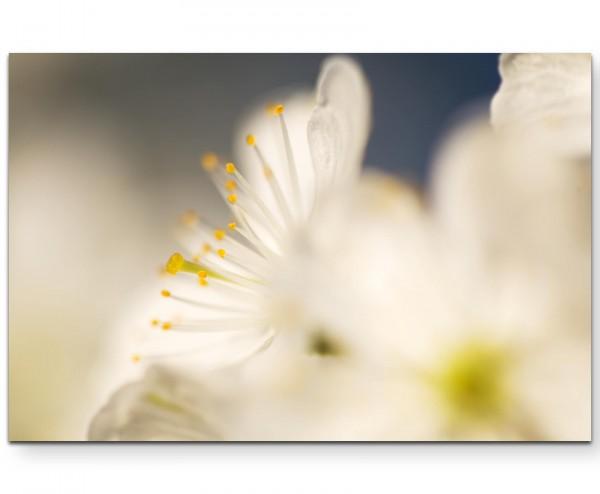 Kirschblüte – Fotografie soft - Leinwandbild