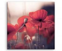 Naturfotografie – Gruppe roter Mohnblüten auf Leinwand