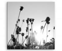 Künstlerische Fotografie – Knospen in der Sonne auf Leinwand