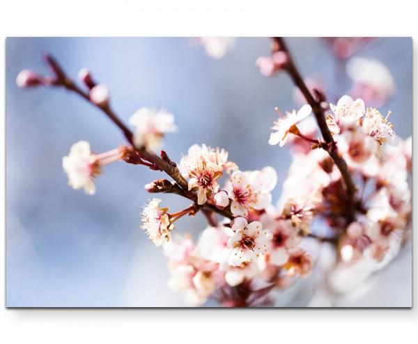 Kirschblüten im Frühling - Leinwandbild
