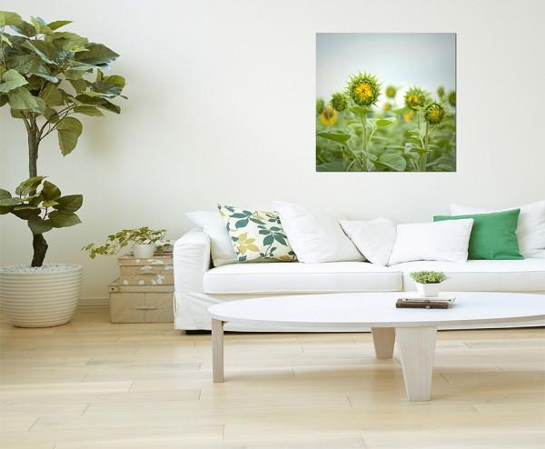 80x80cm Sonnenblume Feld Knospe Blätter