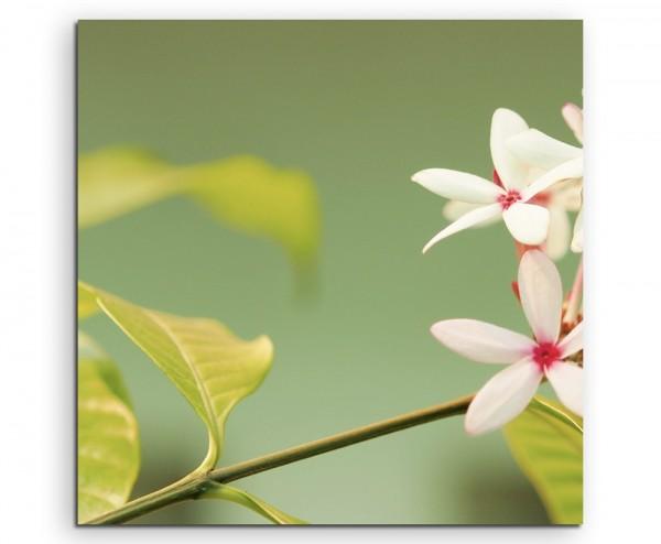 Naturfotografie – Zartrosa Blüten auf Leinwand