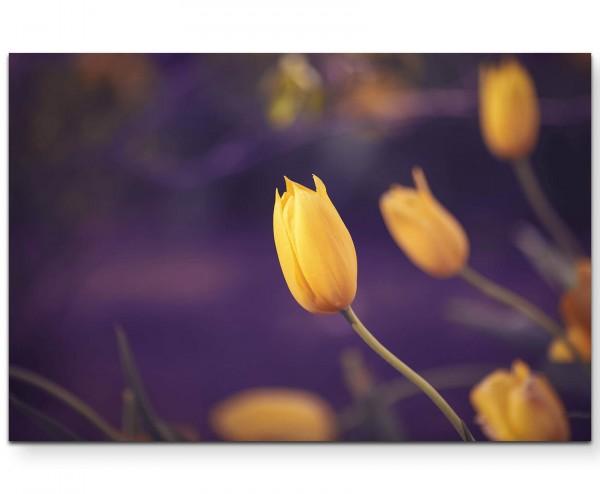 Gelbe Tulpe + violetter Hintergrund - Leinwandbild