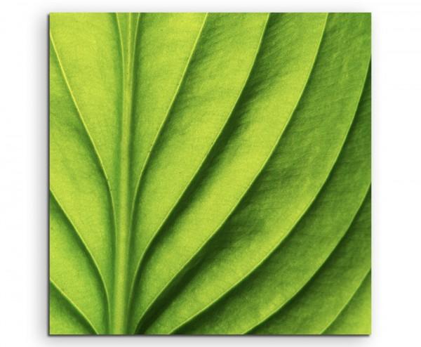 Naturfotografie – Grünes Blatt mit Linien auf Leinwand