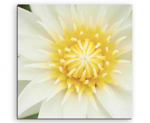 Naturfotografie – Weiße Lotusblumen auf Leinwand