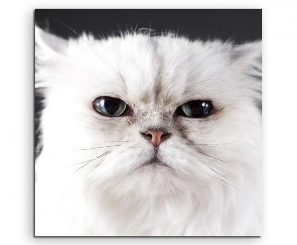 Tierfotografie – Weiße Katze im Portrait auf Leinwand exklusives Wandbild moderne Fotografie für ihr
