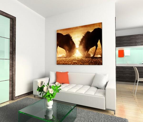 120x80cm Wandbild Gnus Kampf Dunst Sonnenlicht Kalahari Wüste