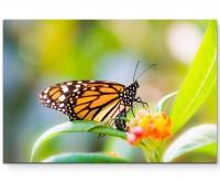 Schmetterling auf einer Blüte – Frühling - Leinwandbild