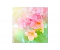 80x80cm Blumen rosa Nahaufnahme