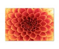 120x80cm Blume Blütenblätter makro rot