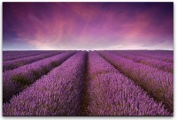 Lavendel Felder Wandbild in verschiedenen Größen