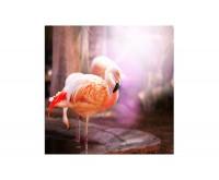 80x80cm Flamingo Vogel pink