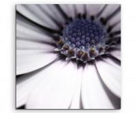 Künstlerische Fotografie – Weiße blumen mit Blau- und Grautönen auf Leinwand