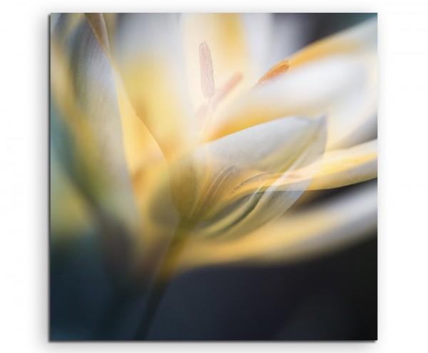 Naturfotografie – Weiße Blüten mit goldenem Schein auf Leinwand