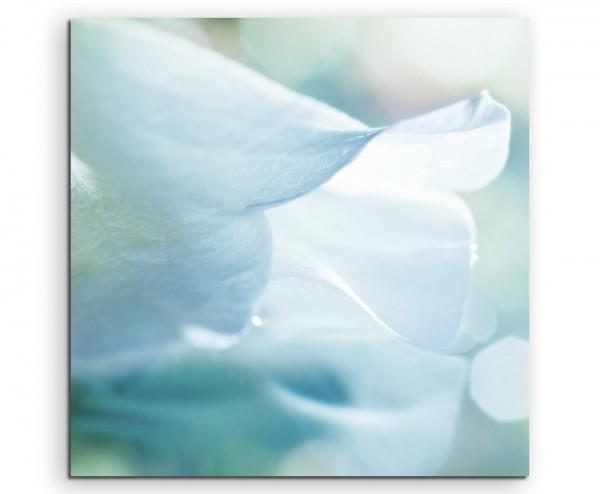 Künstlerische Fotografie – Weiße zarte Blütenblätter auf Leinwand