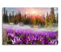 120x80cm Wandbild Ukraine Alpengipfel Bäume Blumen Morgensonne