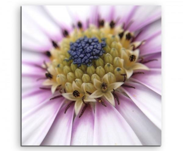 Naturfotografie – Gänseblümchen in Großaufnahme auf Leinwand