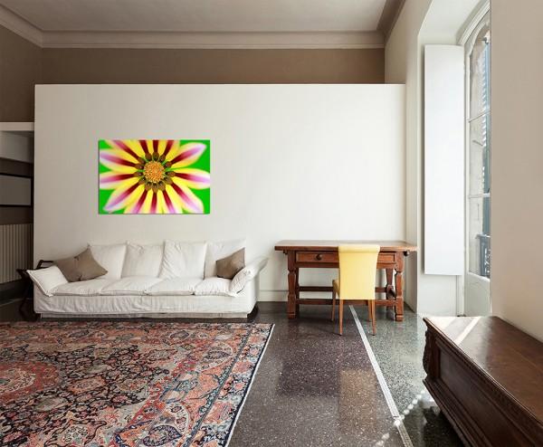 120x80cm Gazanie Sonnentaler Blüte exotisch makro