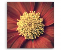 Naturfotografie – Rote blumen mit gelbem Pollen auf Leinwand