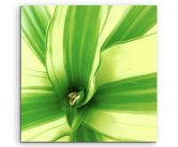 Naturfotografie – Drachenbaum Pflanze auf Leinwand