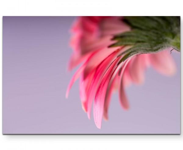 Gerberablüte von unten – floraler Hintergrund - Leinwandbild