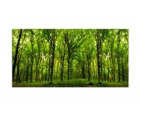 120x60cm Wald Bäume Natur Sonnenstrahlen