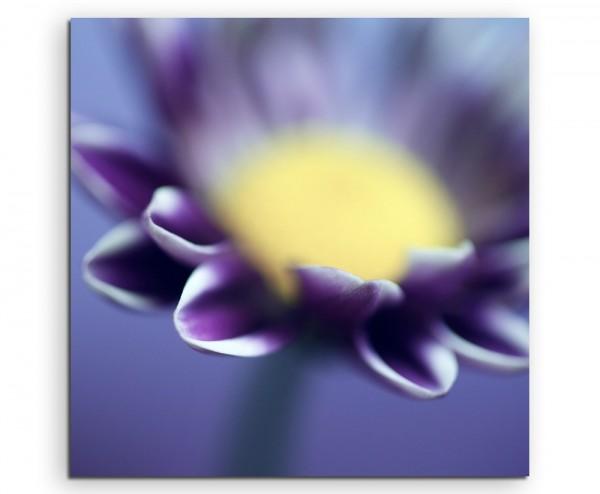 Naturfotografie – Lila Blüte in Großaufnahme auf Leinwand