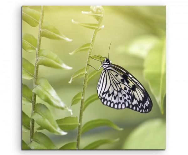 Naturfotografie – Schwarz weißer Schmetterling auf Leinwand