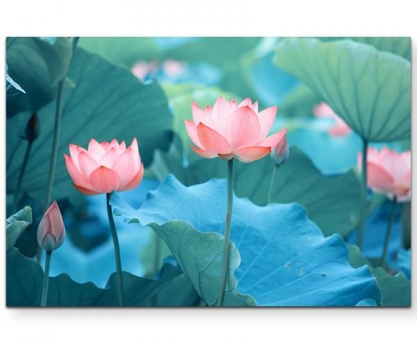 Blühender Lotus - Leinwandbild