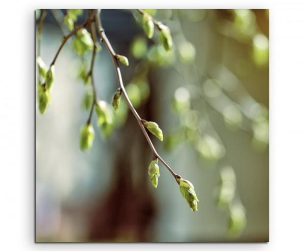 Naturfotografie – Zweig im Frühlingslicht auf Leinwand