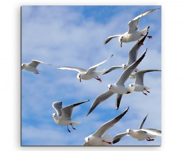 Tierfotografie – Möwen in der Luft auf Leinwand