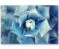 Fotografie – Kaktusgewächs von oben - Leinwandbild