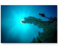 Unterwasser – Sonnenstrahlen - Leinwandbild