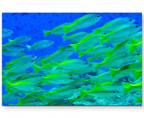 Gelbe Fische – Unterwasserfotografie - Leinwandbild