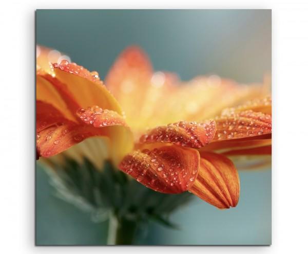 Naturfotografie – Orange Blüte mit Tautropfen auf Leinwand