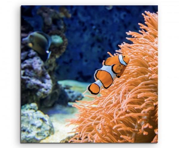 Naturfotografie – Clownfisch am orangen Korallenriff auf Leinwand exklusives Wandbild moderne Fotogr
