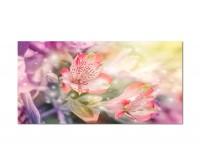 120x80cm Blume Blüte farbenfroh Hintergrund