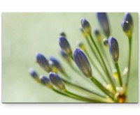 Schmucklilien - Leinwandbild