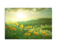 120x80cm Blumenwiese Frühling Sonne Natur