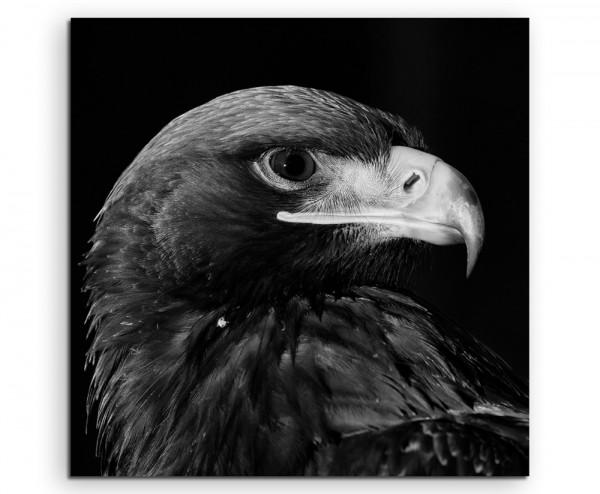 Tierfotografie – Seeadler im Profil auf Leinwand