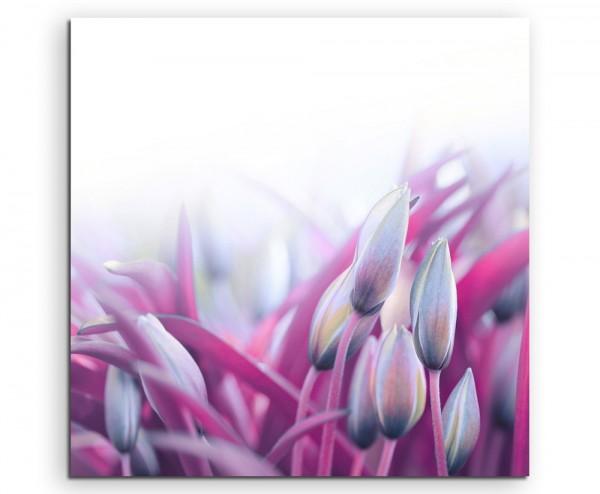 Naturfotografie – Pinke Tulpen auf Leinwand