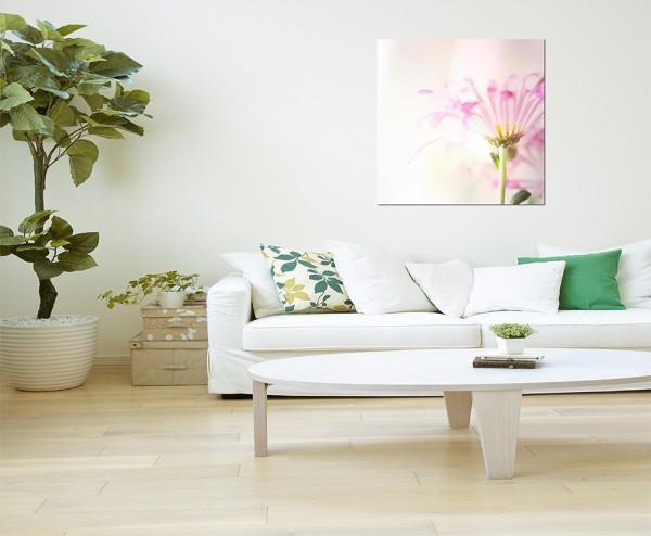 80c80cm Blume Blüte farbenfroh Hintergrund