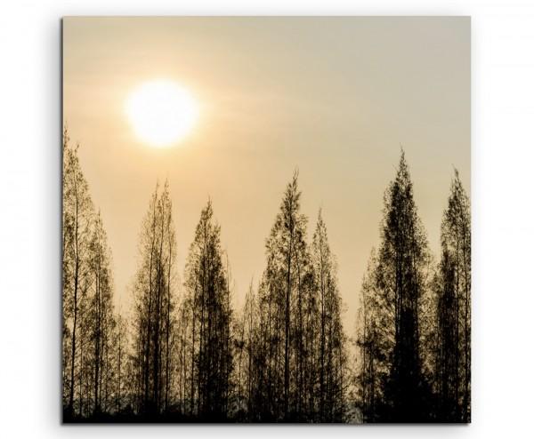 Landschaftsfotografie – Pinienbäume im Sonnenschein auf Leinwand