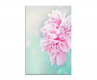 120x80cm Pfingstrose Blume rosa Hintergrund floral