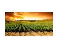120x60cm Weinrebe Landschaft Himmel Sonne