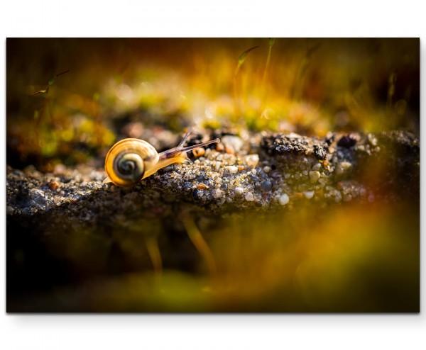 kleine Schnecke auf Moos, Nahaufnahme - Leinwandbild